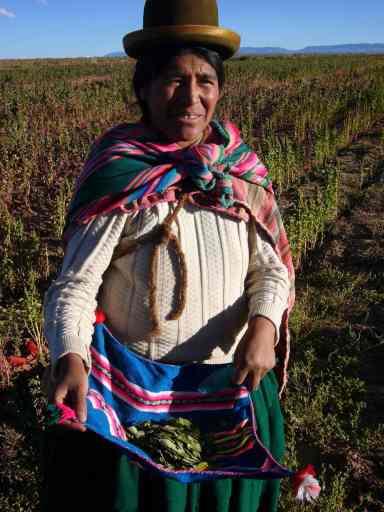 """À Ayamaya, une communauté qui, grâce au meilleur prix qu'ils reçoivent, a pu s'équiper d'équipements pour cultiver leur quinoa de façon plus optimale. Ici, une cholita montre les feuilles de coca qu'elle traine toujours avec elle. """"Quand on travaille fort dans les champs, ça donne beaucoup d'énergie"""", dit-elle. Party!"""