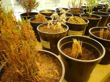 La Fondation Proinpa (www.proinpa.org) a pour mission de développer des méthodes d'agriculture durable et biologique pour protéger les milliers d'espèces de quinoa et assurer la souveraineté alimentaire du quinoa royale en Bolivie. Ici, différentes plantes à utiliser en compagnonnage avec le quinoa pour éloigner certains insectes. Très ingénieux dans tous leurs projets.