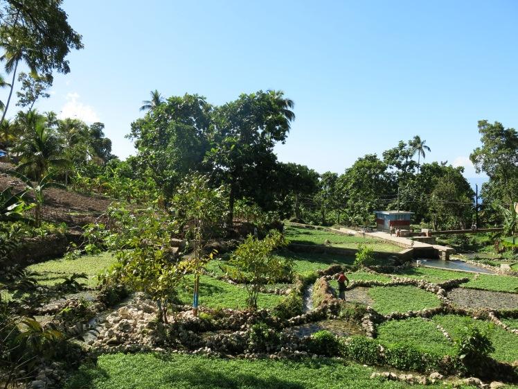 Les plantations de cresson à Kay Piat.JPG